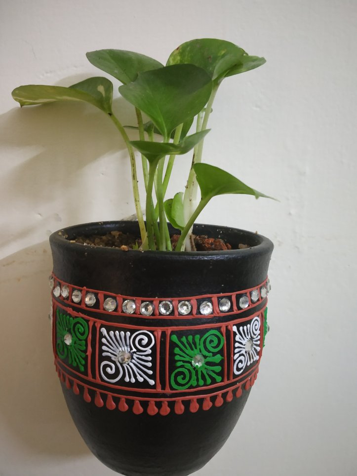 Keep money plants indoors for positive energy.