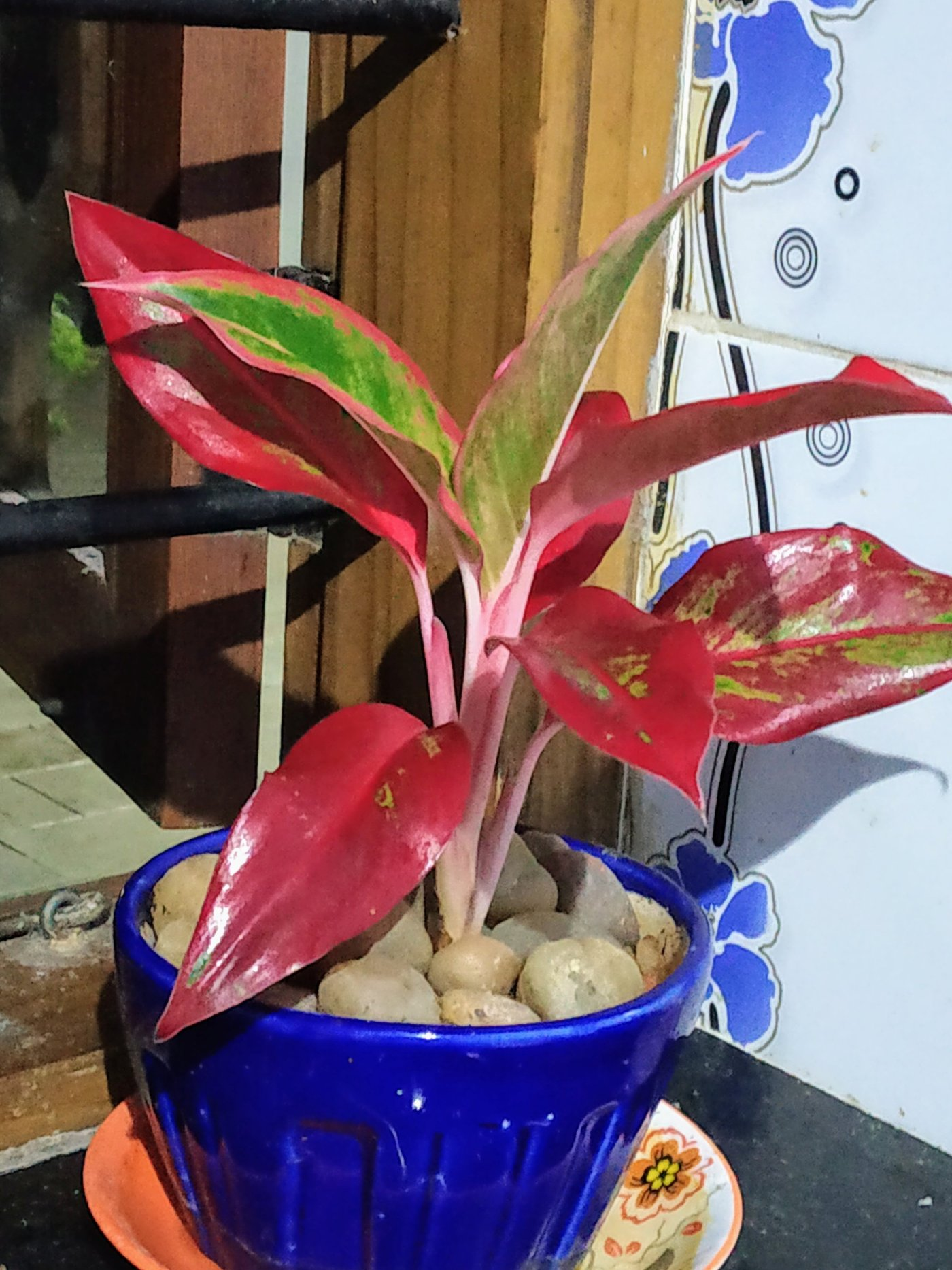 Air purifying plant.