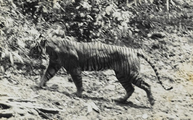 Animals We Cannot See Again