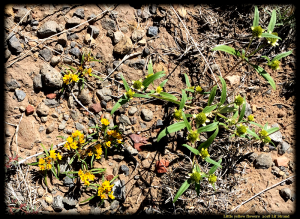 Pretty yellow flowers   2018 Lif Strand photo