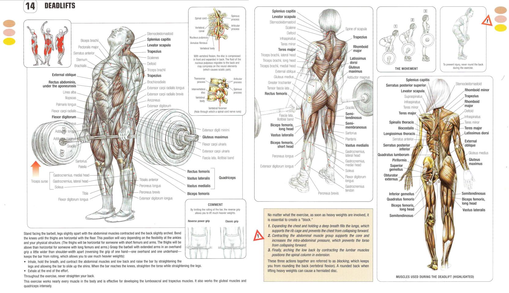 pull up muscles worked diagram vga connector wiring build more muscle burn fat get sexy with