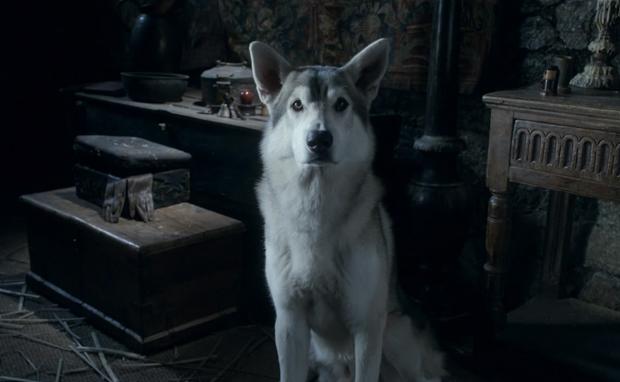 game of thrones lobo