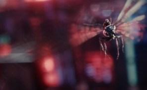 antmanfly