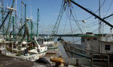 Bateaux de pêche au port du Larivot © Ifremer