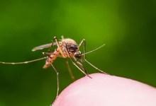 صورة وزارة الصحة الإسبانية أجرت تحقيق يطالب  بـالتنبيه لخطر أكبر من فيروس النيل