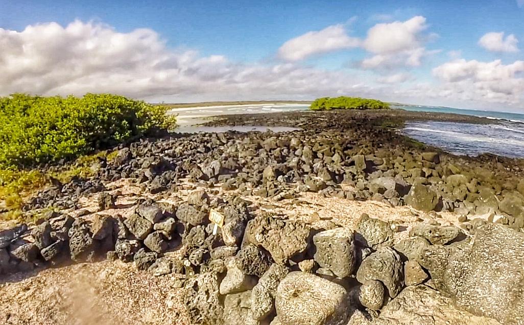 Tortuga Bay Galapagos Santa Cruz