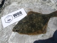 Flounder Cornish Lure Festival