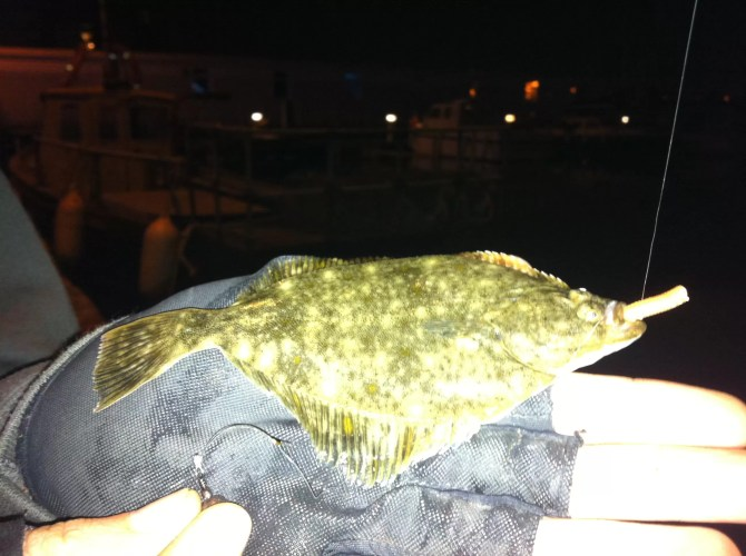 LRF Flounder Plymouth