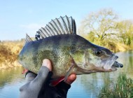 Kennet and Avon Perch