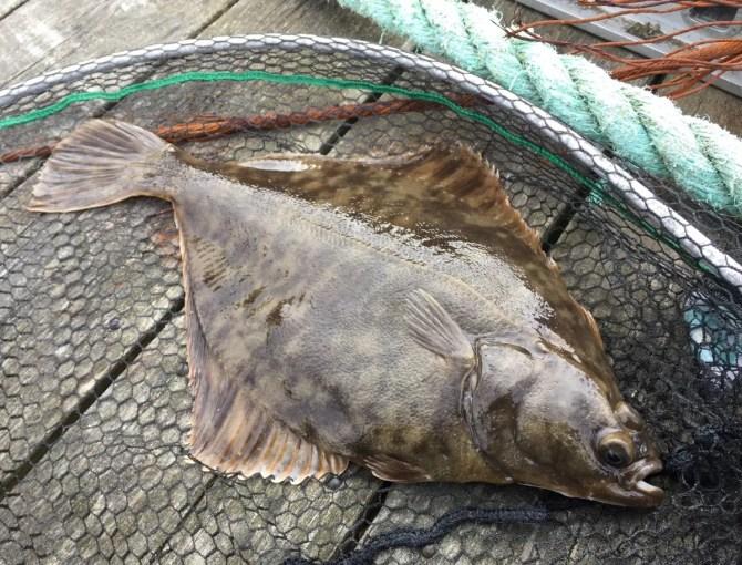 LRF Flounder