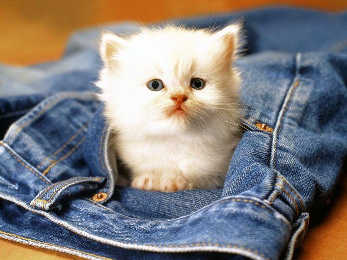 Super Cute Baby Cats Wallpaper Poze Pisici De Craciun Nicoletaiuliana