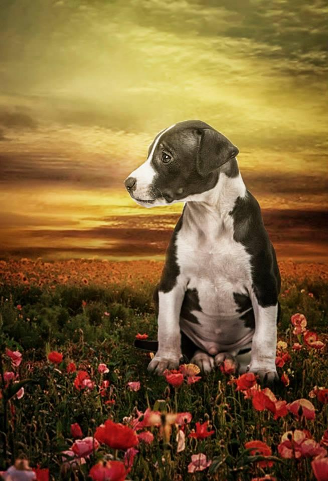 foto mascota 23 lightangel Pedro J Justicia - Album para mascota o con mascota -