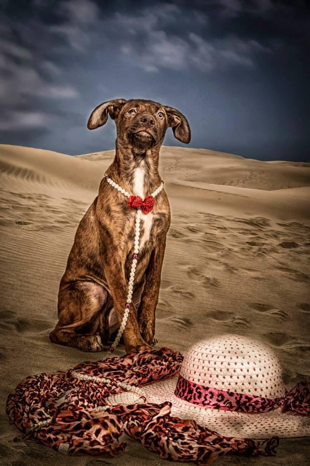 foto mascota 27 lightangel Pedro J Justicia - Album para mascota o con mascota -