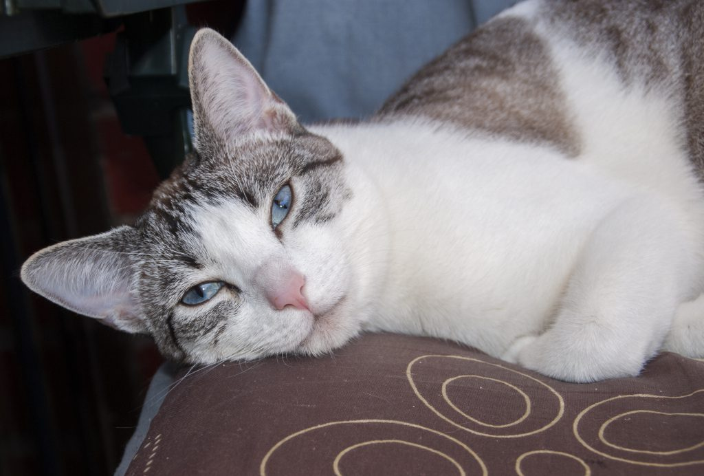 foto mascota 63 lightangel Pedro J Justicia - Album para mascota o con mascota -