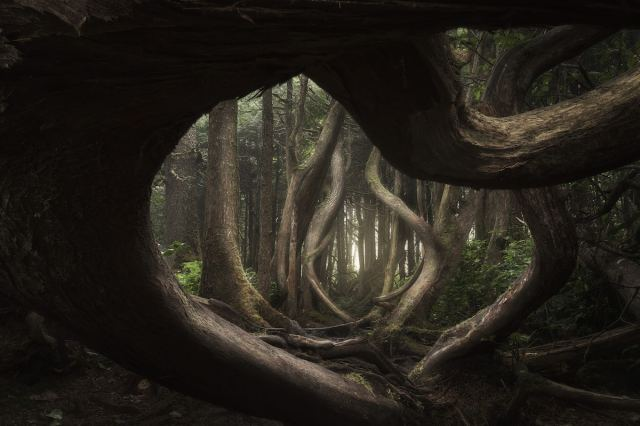 ILPOTY-2018-AdamGibbs-Twisted_Forest.jpg