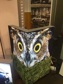 OWL_3041