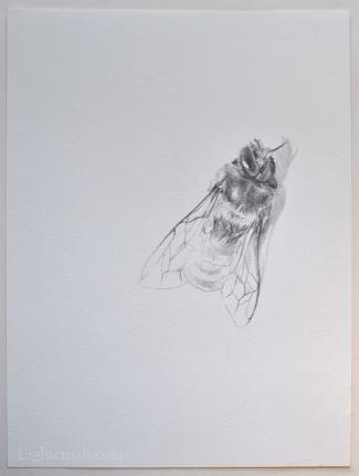 Sleep - Graphite on paper - 24x32cm - 2015