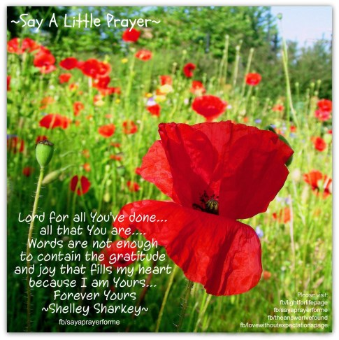 1 f of TAIF - shelley - You