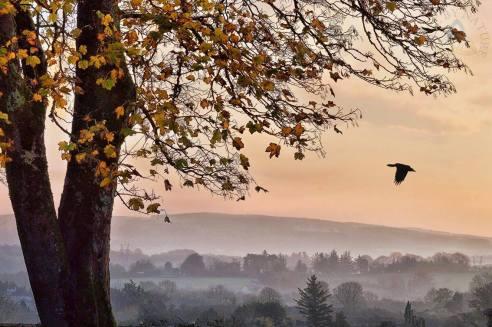 Autumn mist in Corofin Co. Clare. Photo Clare by Nature