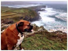 John Flynn sent us this photo of his dog Toa overlooking George's Head, Kilkee