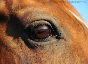 Sunset reflected in a horse's eye in Newmarket on Fergus, Co. Clare. Photo David Crimmins
