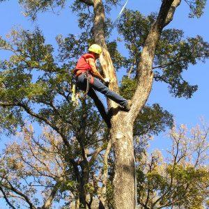 Arborists & Landscaping