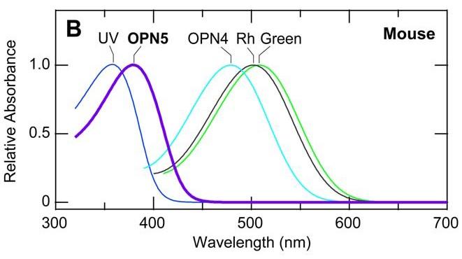 Seeing Ultraviolet - FIG. 4