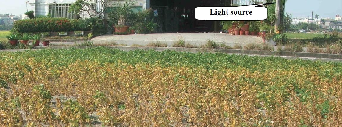 Botanical Light Pollution - FIG. 1