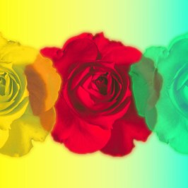 Yellow red blue rose form