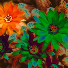 Orange solarization flower