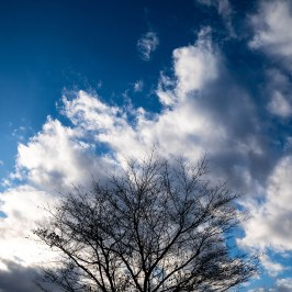 Clouds and big tree
