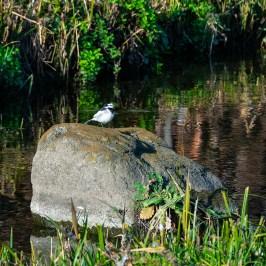 Egret perching on a rock