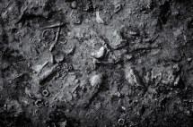 fossilbedsfallsofOhio