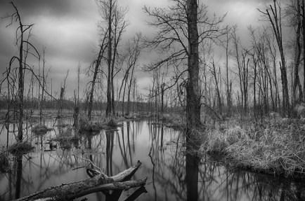killbuck marsh along messner road