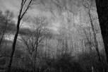 southern approach to oak barrens