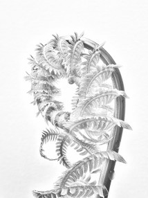 unfurlingfern2