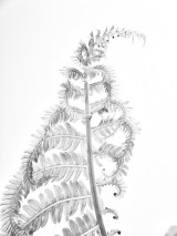 unfurlingfern6