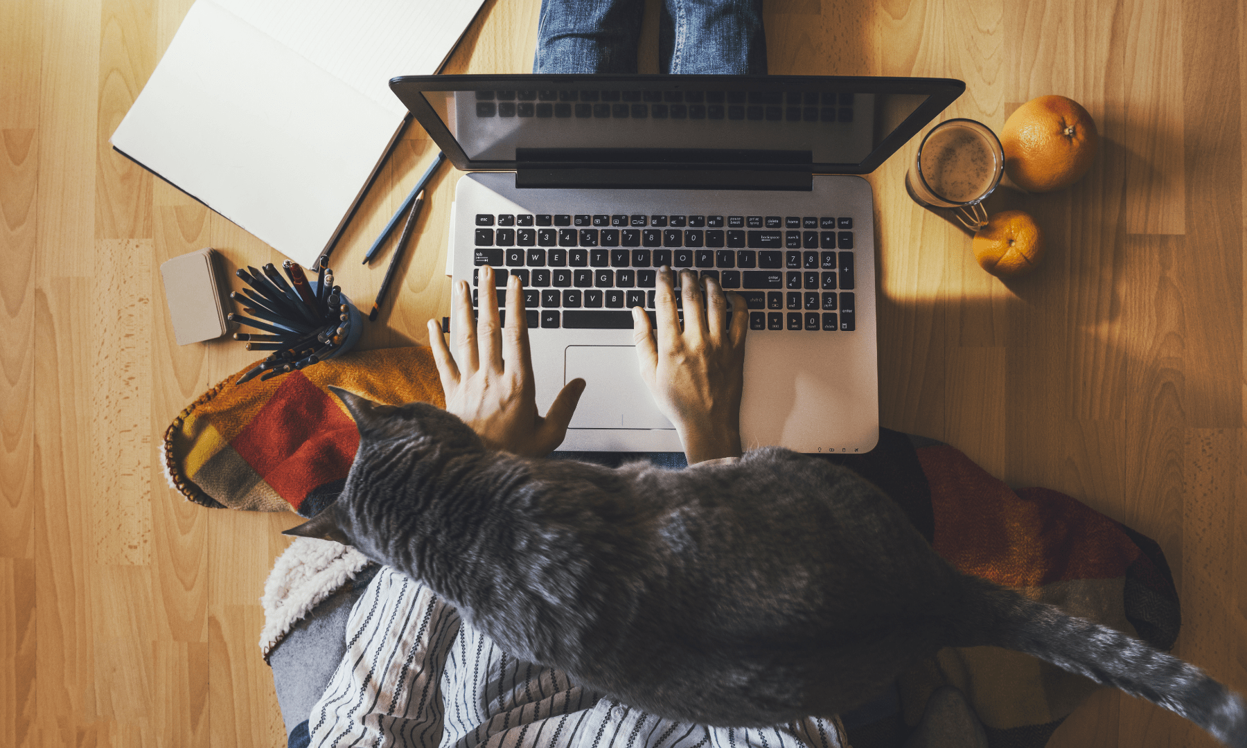 working from home | girl with laptop and cat on her lap