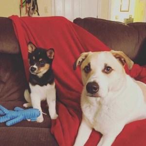 katti betterton dogs