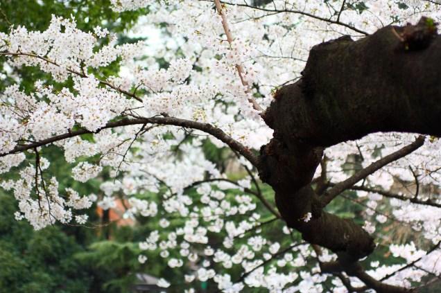 Unwinding Spring