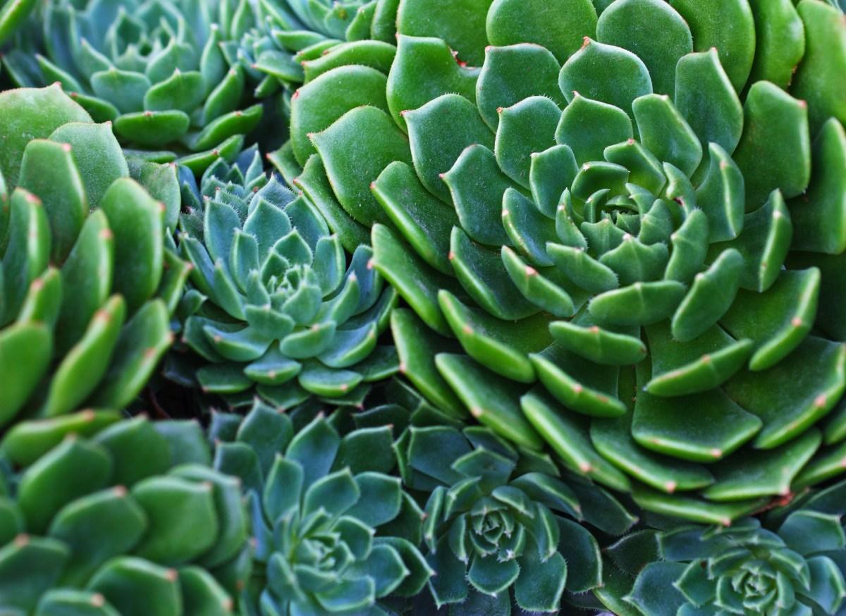 Nature Patterns Slant Of Light