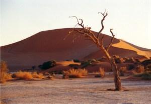 desert-morning-1526792