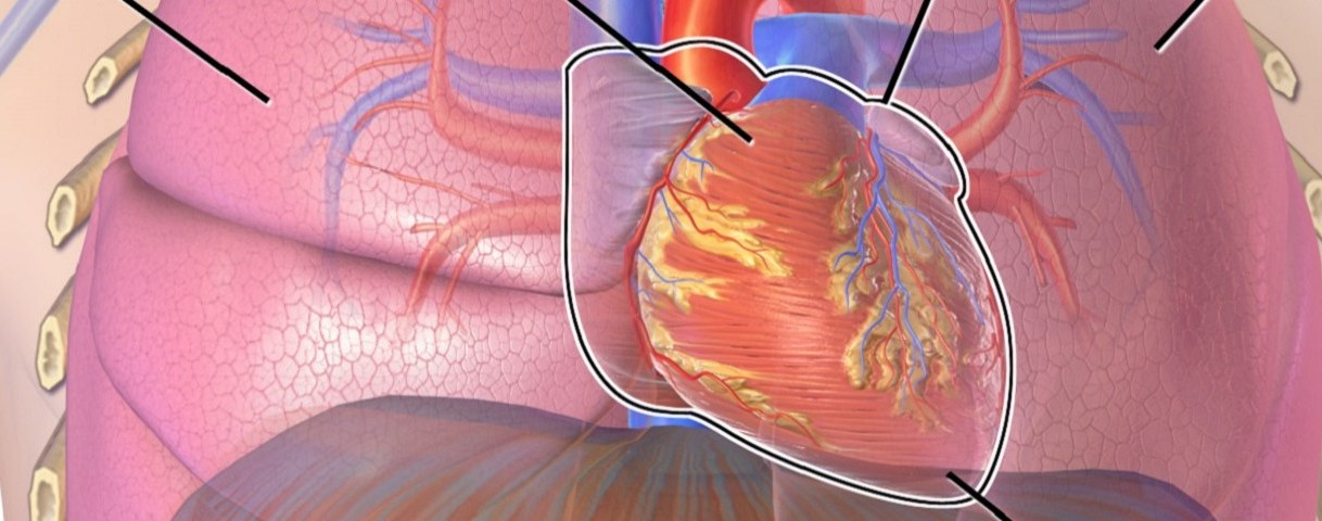 Scientist combines medicine and engineering to repair a damaged heart