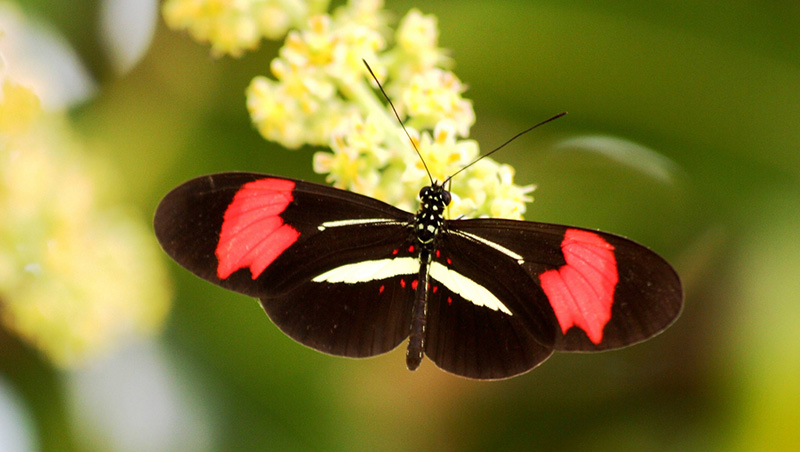 #weekendusers Searching for the secrets of butterfly colours