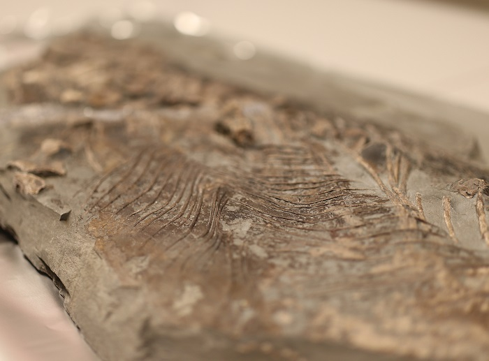 Biological material discovered in Jurassic fossil