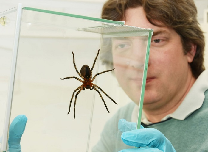 What keeps spiders on the ceiling?