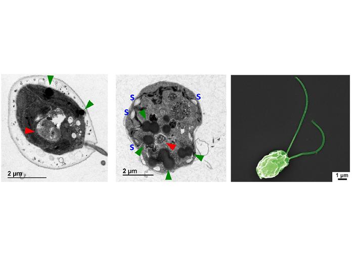 Metal pollutants cause metabolic alterations in algae