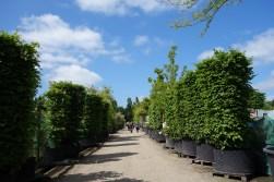 3-Specimen trees