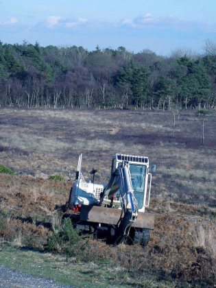 1-scrub-clearance-in-2010