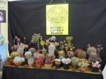 6-Magnificent cacti